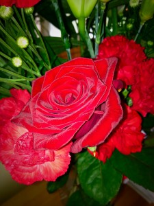 A perfect velvet red rose from my hubby on our wedding anniversary.
