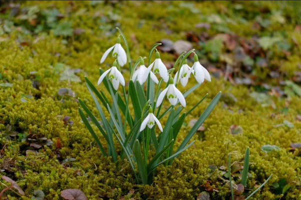 FF Spring Has Sprung