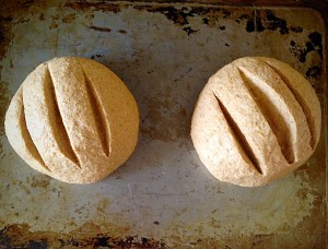 Cut three lines through each loaf - this is optional, but does give a better crust.