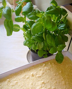 Here I've used shop bought, fresh, potted Basil. Not only is it in the lasagne, it enhances the photo!