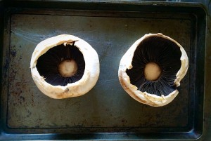 Two field/portobello mushrooms.