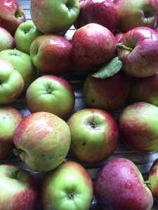 A very few of our beautiful apples.