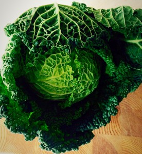 Look how gorgeously green this beautiful Savoy cabbage is.