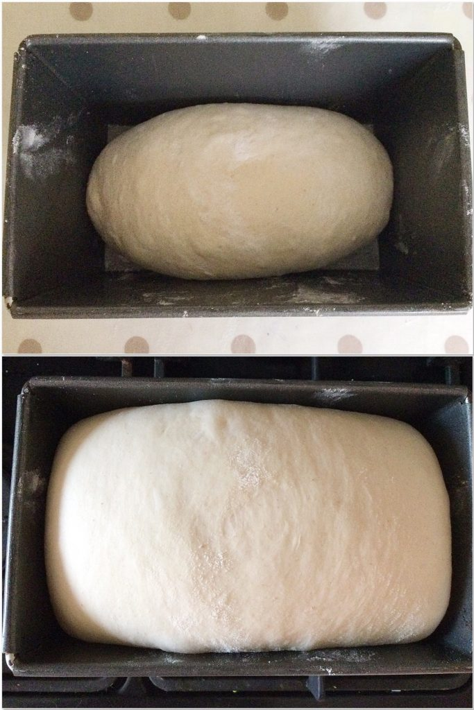 Shaped bread dough in tin before and after second rise.