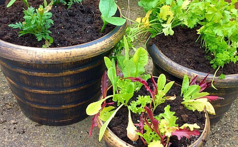 Wilko Gardening Product Review