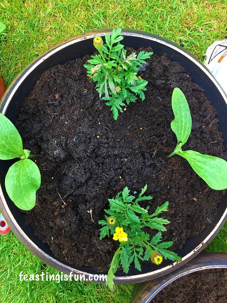 FF Wilko Gardening Product Review