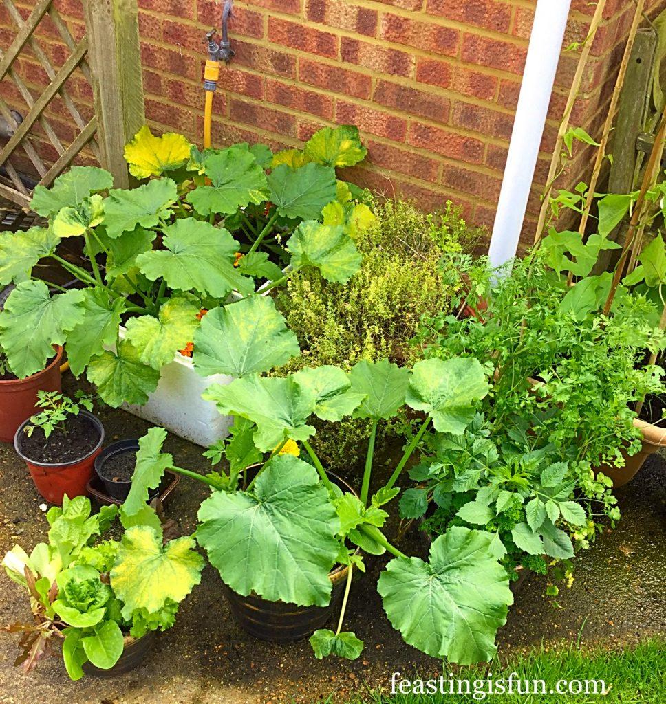 FF Growing Vegetables Week 1