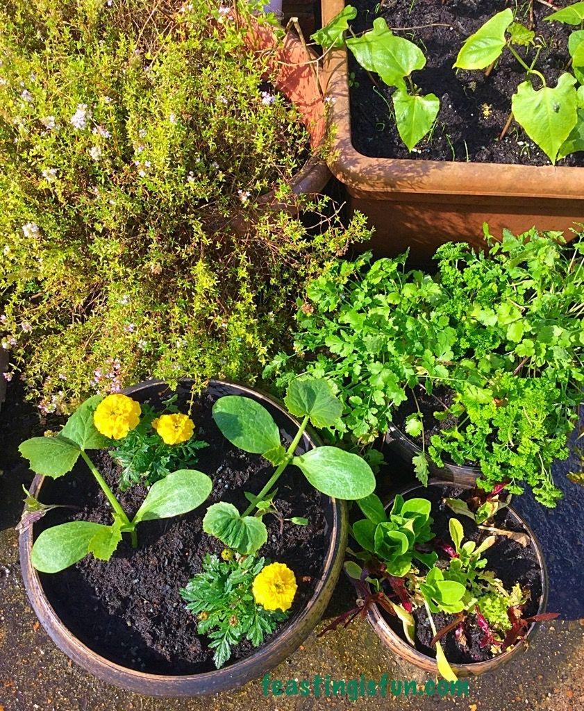 growing vegetables week 1 feasting is fun. Black Bedroom Furniture Sets. Home Design Ideas