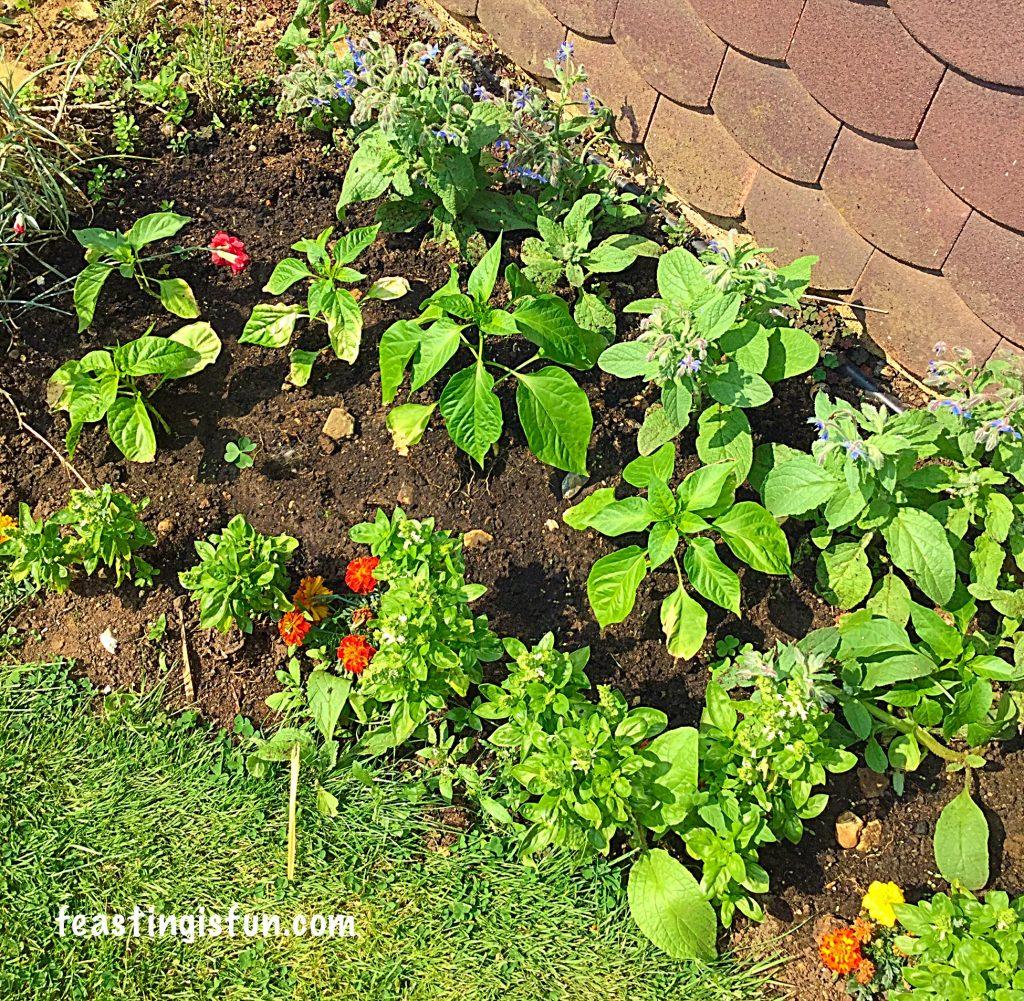 FF Growing a Vegetables Weeks 3-4