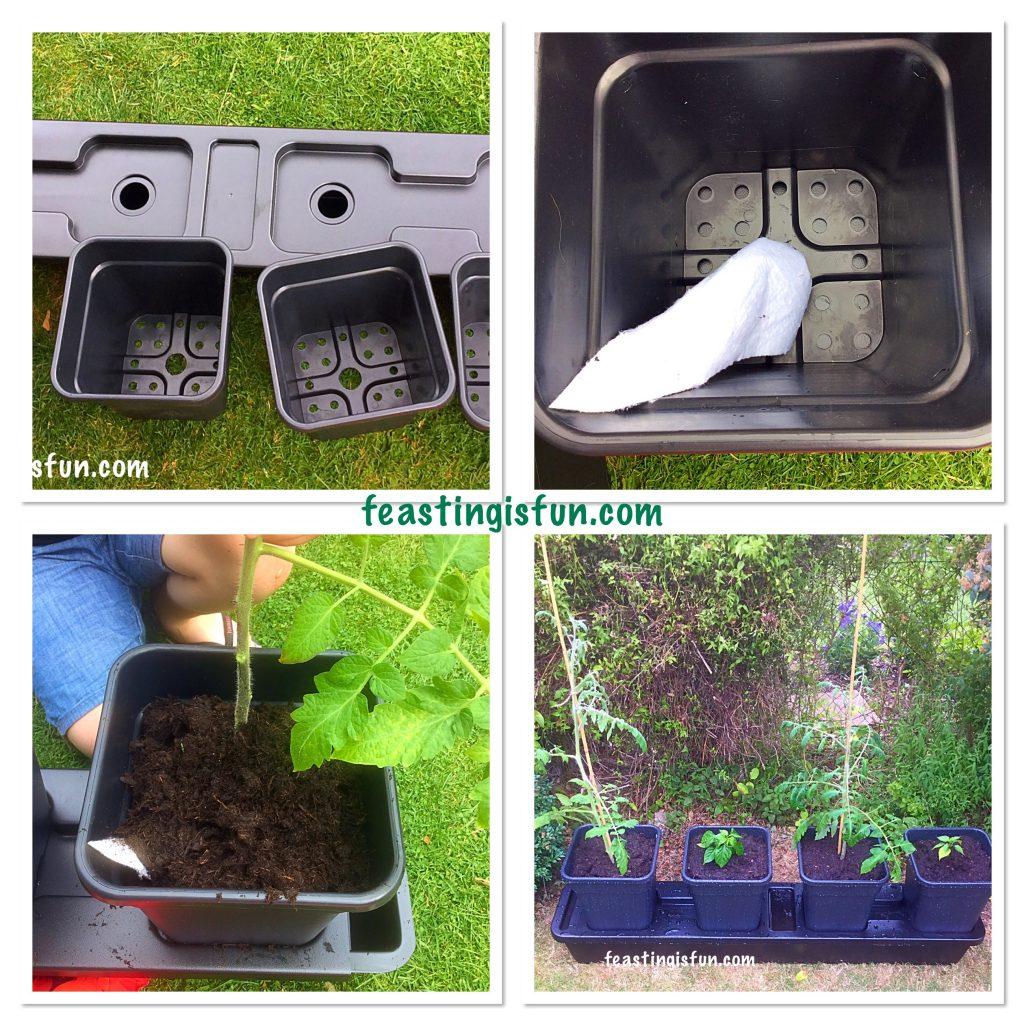 FF Growing Vegetables Week 5