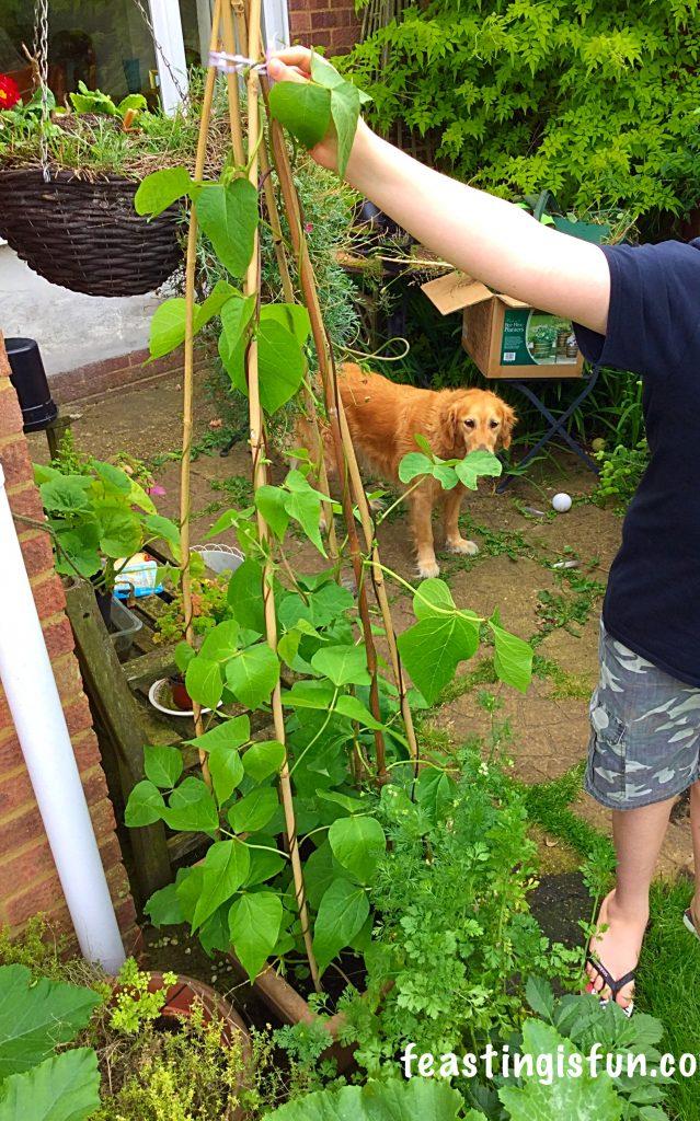 FF Growing Vegetables Week 2